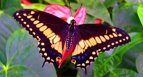 Centrale - Immagini di farfalle a colori ...